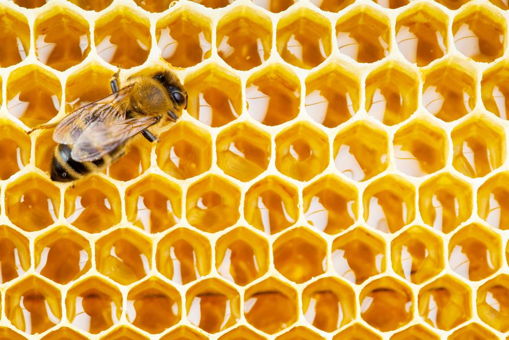 Pčelinji propolis: Čudo iz košnice